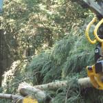 Energieholz-Aggregat